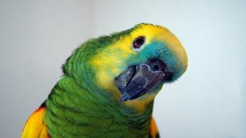 parrot-898125_1280.jpg